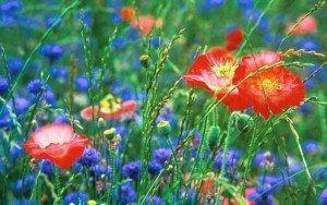 jardin-de-ville-fleurs-champs-decor