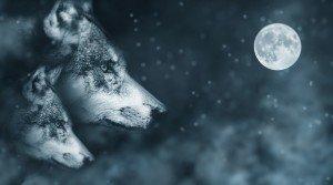 wolf-2018051_960_720